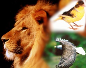 3buyukler_hayvanlar.jpg